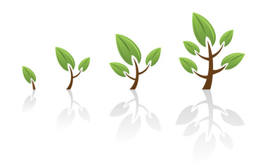 Growing Stages Of Tree
