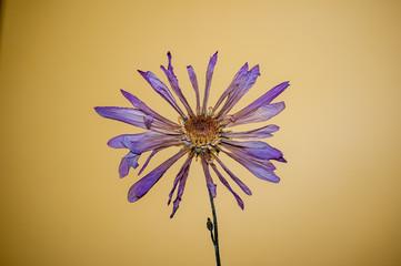 Purple flower yellow background