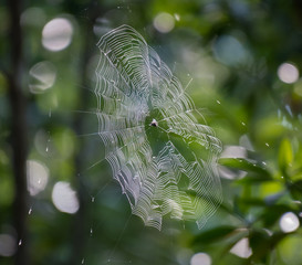 Close up view of spiral spider web.