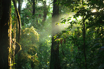 Sun rays deep in the rain forest