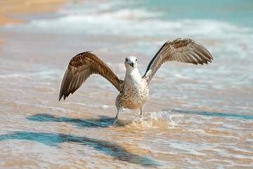 Seagull on a sandy sea shore .