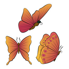 The butterflies with orange wings. Beautiful nature summer.