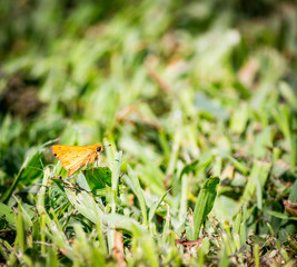 Butterfly On The Green Lawn