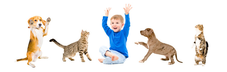 Cheerful child and playful pets, isolated on white background