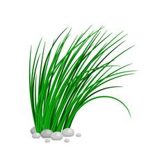 Bush of tall green grass