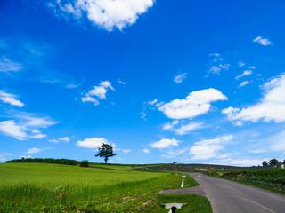 夏の北海道