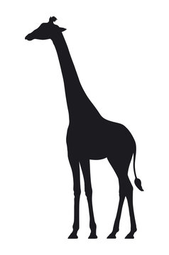 Vector silhouette of a giraffe on white background