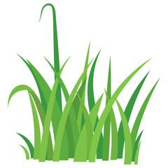 Fragment of a green grass.