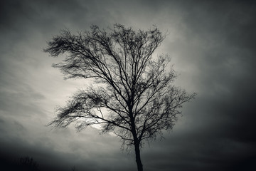 Dark silhouette of bare tree over dramatic sky