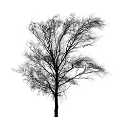 Black bare tree photo silhouette isolated on white