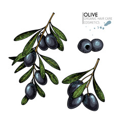 Vector set of hair care ingredients. Organic hand drawn elements. Farm market vegetables. Colored black olive branches.