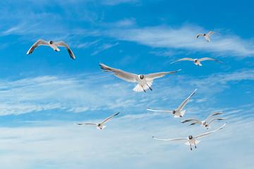 Seagulls sky