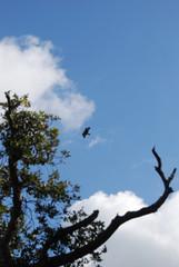 Birdwatching poiana