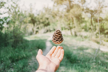 Pine cone over hand.