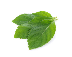 Peppermint on white background