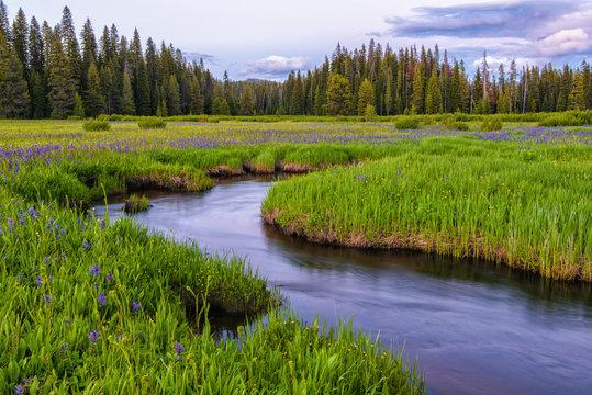 Packer Meadows at Lolo Pass on the Idaho/Montana border
