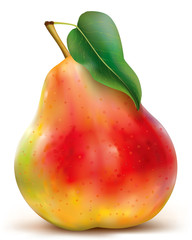Vector of red pear on white background