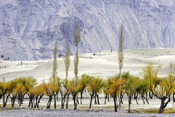 Autumn and Skardu desert
