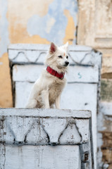Dog with hindu paint in her head