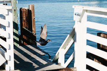 coastal birda taking flight in marina