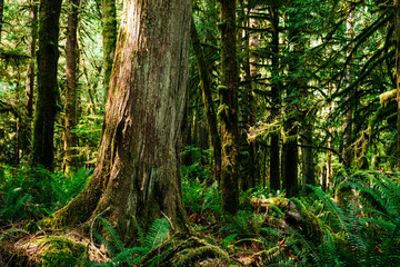 Northwest Rainforest