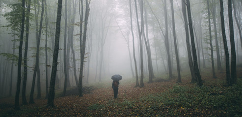 Man with umbrella in forest park with fog