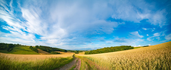 Panorama of wheat field in the morning in Kansas Wall mural