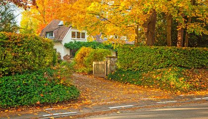 House with nice garden in autumn