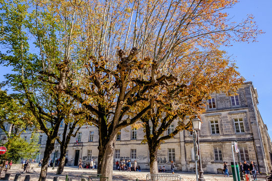 Old style school with autumn trees, Angouleme, France
