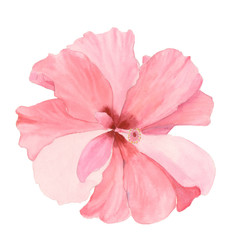 Watercolor red hibiscus. Hand painted exotic floral illustration with leaves isolated on white background. Tropic flower for design, print and fabric