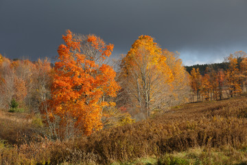 Vibrant autumn foiliage with dark sky