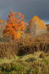 Vibrant autumn foliage with dark sky