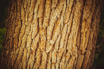 A bark of the tree