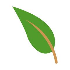 green leave natura plant botanical