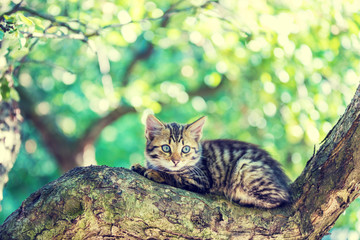 Cute little kitten lies on the tree in the garden