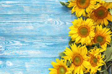 Yellow sunflowers on blue wooden background. Copy space.