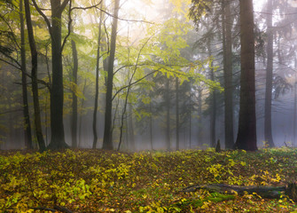 Mysterious autumn forest with different color trees and dense fog in Czech Republic, Europe