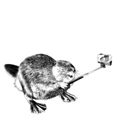 beaver photographed with selfie stick for phone sketch vector graphics black and white drawing