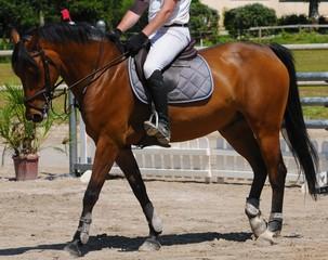 cheval et cavalier en compétition