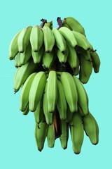 bananes vertes sur fond bleu