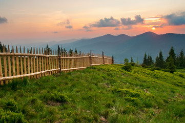 Spruce and pine trees on a lush green slope against mountain tops covered with several clouds at sunset. Warm summer evening. Marmarosh range, Carpathian mountains, Ukraine
