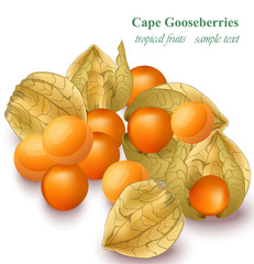 Cape gooseberries realistic Vector isolated on white background