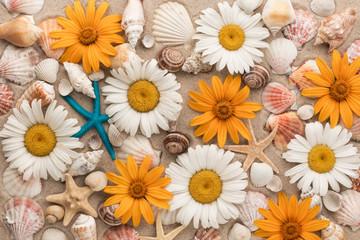 Beautiful background of chamomiles, sea shells, sea stars on the sand.