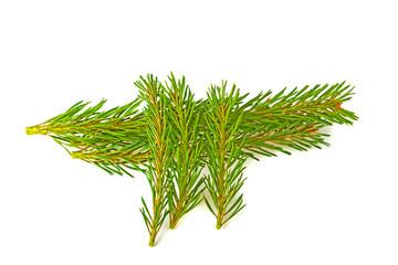 Sprig of pine on white background