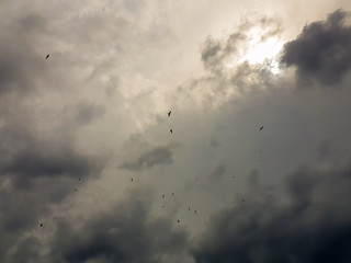 Seagulls flying up in the sky against a dramatic sky.