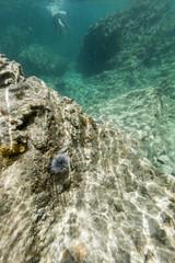 Under water caribbean sea, ocean from St Martin, St Maarten