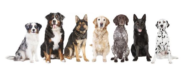 große Hunde freigestellt