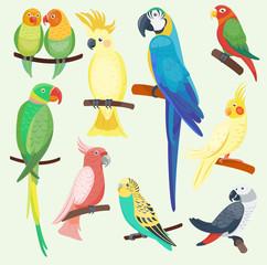 Cartoon exotic parrots set vector illustration wild animal birds zoo tropical fauna ara isolated
