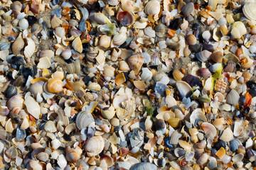 Natural background of broken seashells on wet sand beach