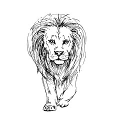 Sketch by pen of a lion front view
